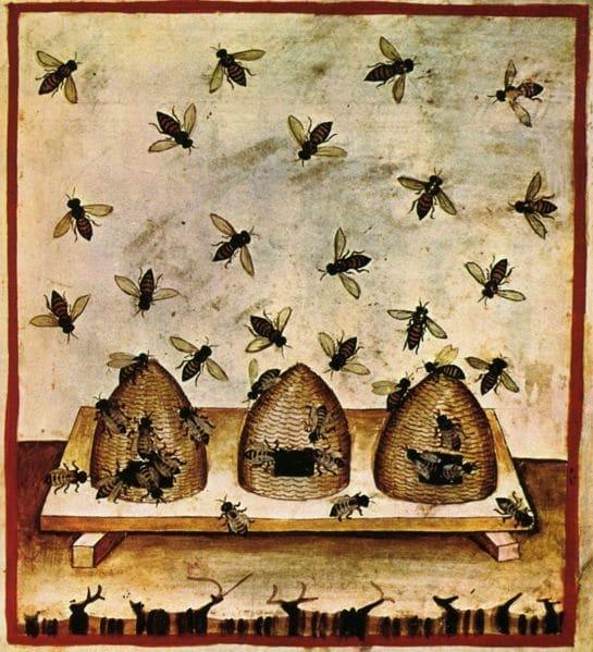 Abeilles et ruches Tacuinum Sanitaris, ouvrage médical du moyen âge, tiré du Taqwin al‑sihha