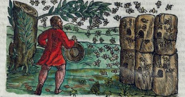 Ruches et abeilles. Illustration du 16e siècle